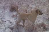 DEE<BR> OWNED BY KEVIN HULL<BR>WHAT A NICE PUP 11 MONTHS OLD